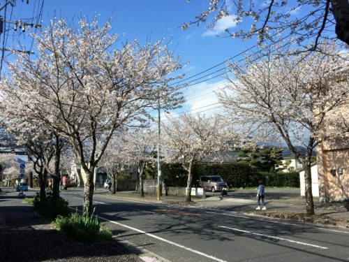 舞い散る桜の風景